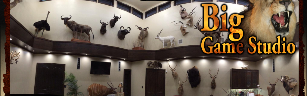 Big Game Studio Taxidermy